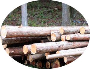 檜(ひのき)の原木